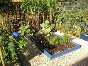 Established small vegetable garden.